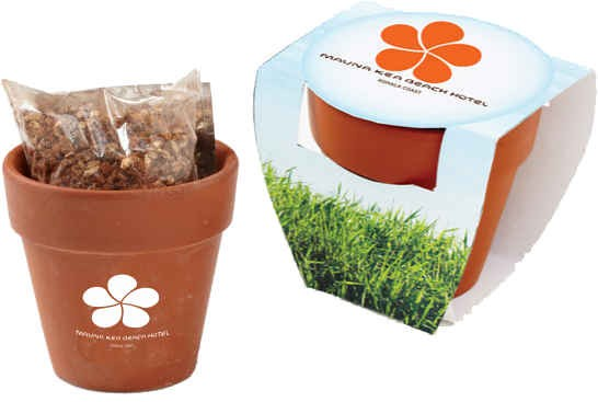 Terracotta Pot with Choice of Seeds