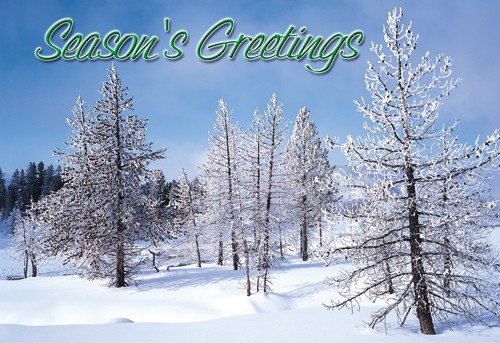 Winter Greetings Holiday Card