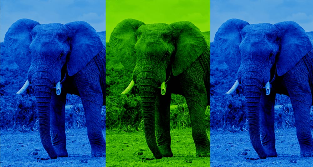 3 African elephants is the weight of paper Warwick recycles in a month