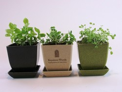 Herb Seeds with Three Piece Rice Hull Planter Set